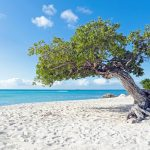 things to do in abc islands
